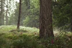 Lambi podpowiada jak zadbać o środowisko naturalne