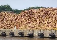 Ceny drewna w Polsce najwyższe w historii