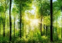 Walki Group wzmacnia platformę Zero Waste Future i licencjonuje technologię Earth Coating od Smart Planet Technologies