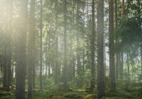 Metsä Tissue na ścieżce zrównoważonego rozwoju