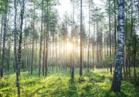 Cele Metsä Board w zakresie redukcji emisji uznane przez inicjatywę Science Based Targets