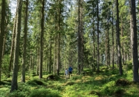 Metsä Board z najwyższą oceną EcoVadis w dziedzinie zrównoważonego rozwoju