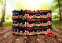 Innowacyjne pudełko z tektury na owoce jagodowe z nadrukiem klasy premium