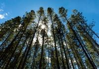 Nowe cele Smurfit Kappa dla zrównoważonego rozwoju w ramach Better Planet 2050