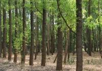 Smurfit Kappa dostosowuje cele związane ze zrównoważonym rozwojem, w oparciu o inicjatywę naukową Science Based Target