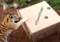 Smurfit Kappa stworzyła zabawki dla dzikich kotów