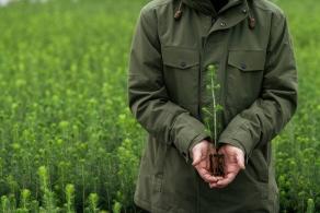 Metsä Board z najwyższą ocenę EcoVadis w dziedzinie zrównoważonego rozwoju